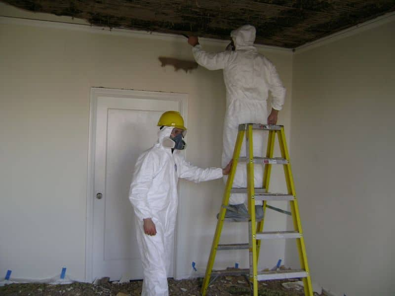 Why Choose Zona for Complete Mold Removal and Remediation Services